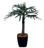 Fourwalls Green Polyester Premium Range Roystonea Plant with Ceramic Vase