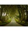 Hashtag Decor Engineered Wood 30 x 20 Inch Road Through Trees Framed Art Panel